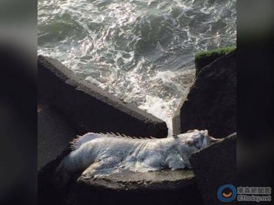 """台湾网友在屏东海鸥公园钓鱼时发现""""白鳍海怪"""" 资深钓客:死亡多时的龙胆石斑"""