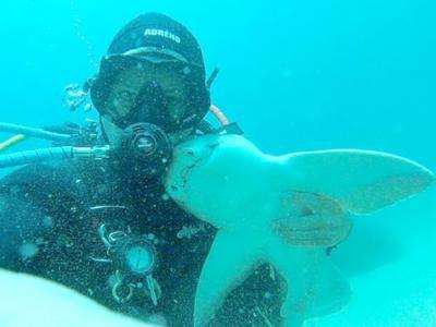 澳洲男子每次潜水相识七年的虎鲨就游过来撒娇讨抱