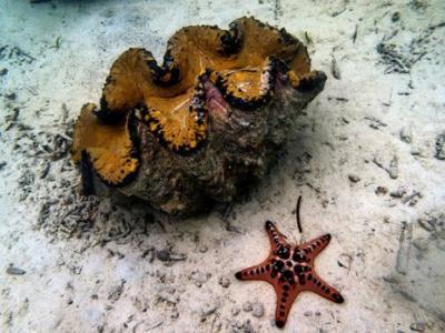 中国立法禁在南海开采砗磲保护珊瑚礁 能否见效?