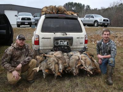 """美国东岸举办""""猎人锦标赛""""大量猎捕到野狼、狐狸与短腿猫 主办单位称为生态平衡"""