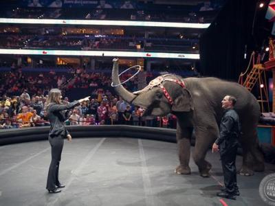 世界三大马戏团之一146年历史的玲玲马戏团将在5月举办最后一场演出