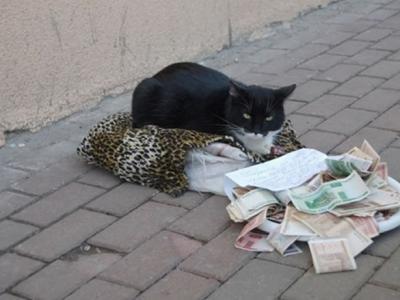 """俄罗斯黑白猫躺抱枕乞讨""""需要钱买罐罐"""" 路人丢钱赞助"""
