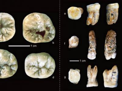 华南早更新世龙骨洞遗址旧石器的最新研究进展