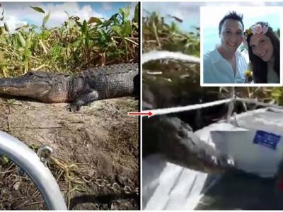 美国佛罗里达州沼泽鳄鱼跳上观光艇 游客吓得鸡飞狗走