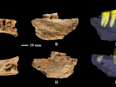 安徽和县直立人可能代表一种残存的原始人类