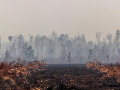 环保团体绿色和平报告:汇丰银行助长棕榈油企业毁印尼雨林