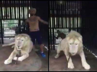 """泰国动物园狮子不满游客骚扰 大发神威""""凶""""对方"""