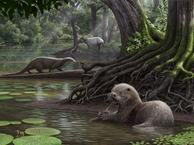 """中美法三国科学家在云南昭通发现600万年前巨型水獭新种化石——""""似獾泰国水獭"""""""
