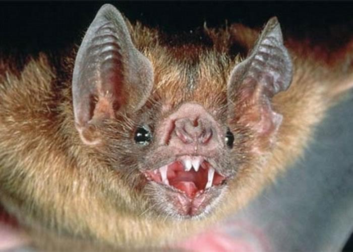 最恐怖的动物_世界上最恐怖的动物 5