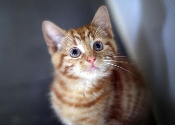 英国科学家建议略为改变猫只的生活习惯。