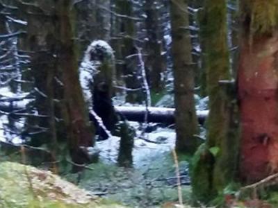 英国北爱尔兰女子在闹鬼森林遛狗时意外拍到疑为大脚怪的身影