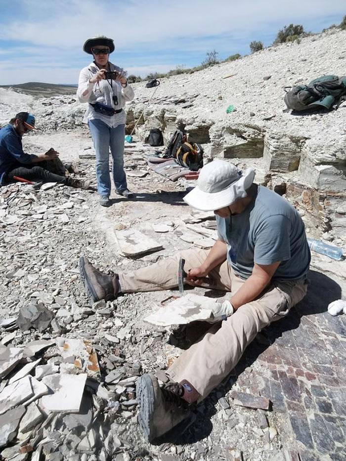 科学家在史前湖底发现化石