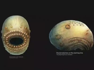 陕西寒武纪最早期的微型后口动物——冠状皱囊动物