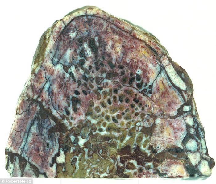 中国云南省禄丰龙肋骨化石中发现保存完好的蛋白质
