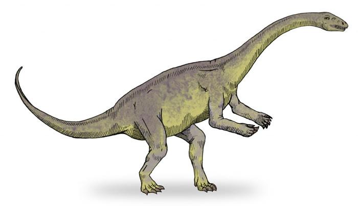 1.95亿年前早侏罗世云南禄丰龙化石中发现保存胶原蛋白证据