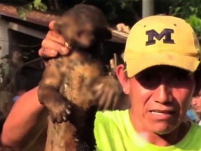 """危地马拉村落居民声称杀死传说生物""""山羊吸血怪""""卓柏卡布拉 后发现只是只蜜熊"""
