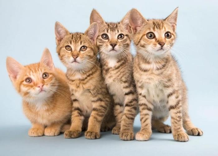研究指猫砂的寄生虫会损坏人类的脑部。