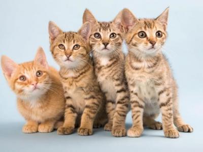 伊朗医科大学研究指不洁猫砂含寄生虫可致人类脑退化