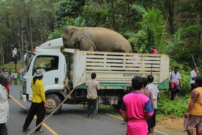 大象被运走。