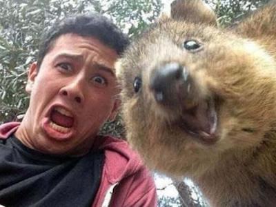 短尾矮袋鼠自拍:这种可爱的澳洲动物是怎么回事?