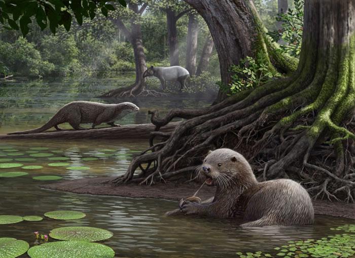 似獾泰国水獭新种生活场景复原图 云南省文物考古所供图
