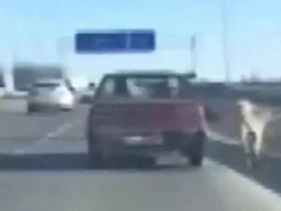土耳其狗主开车遛狗引起争议