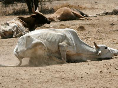 肯尼亚大旱灾270万人挨饿 武装牧民争水求生枪杀6头大象