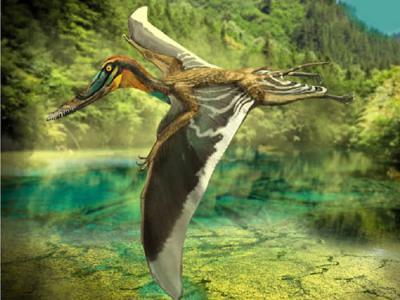 侏罗纪燕辽生物群发现郑氏斗战翼龙 翼手龙类起源研究取得新进展