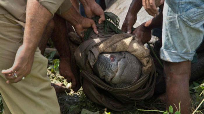 印度加济兰加国家公园为保护野生犀牛可射杀疑似盗猎者