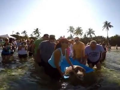 海龟住院2个月重获自由 伊斯拉摩拉岛村民全部都来送行
