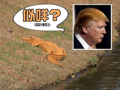 美国南卡罗莱纳州惊现橙色鳄鱼 网民命名:特朗普大鳄