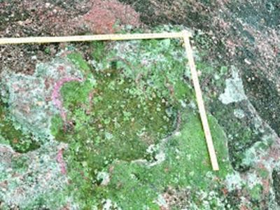 广东河源发现甲龙足迹化石