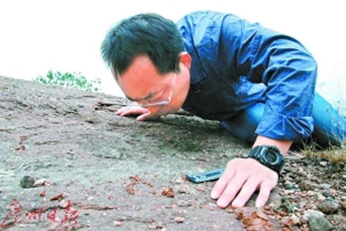 王强在现场鉴定新发现的恐龙足迹化石。