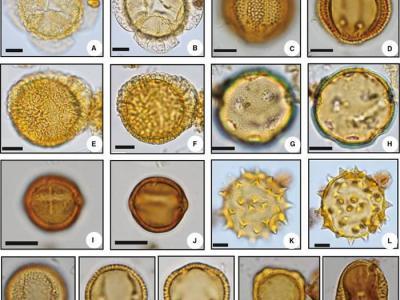 孢粉记录揭示中国南方3万年以来的植被和气候变化