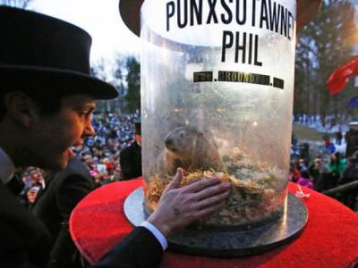 """美国宾夕凡尼亚州著名土拨鼠""""菲尔""""(Punxsutawney Phil)预测距冬天结束尚余6周"""
