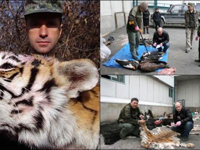 俄罗斯纳霍德卡酷爱打猎商人猎杀濒危西伯利亚虎 被罚逾百万