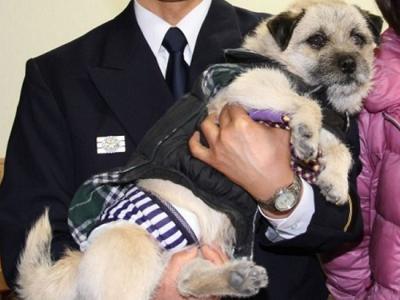 """日本静冈田野市一只狗""""忠太郎""""散步时发现老翁坠水及时提醒主人施救"""
