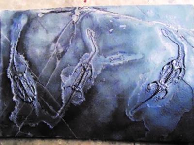 贵州省胡氏贵州龙研究院院长胡小波解读胡氏贵州龙化石