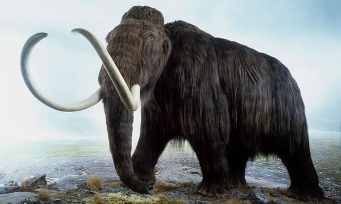 长毛象多年前已灭绝。