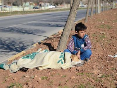 叙利亚8岁小难民在土耳其路旁轻轻安抚车祸狗狗直到救援团体到来