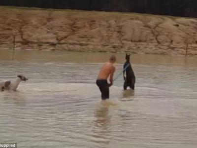 澳洲西澳省两名男子残杀袋鼠 遭判监及罚款