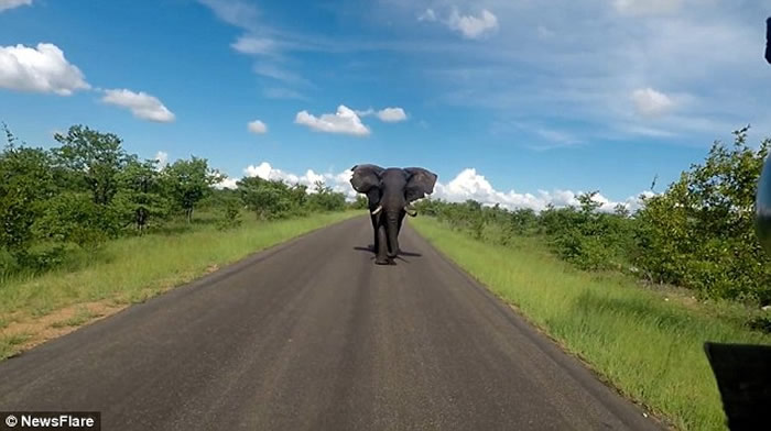 英国女游客在南非国家公园被一只非洲大象从后狂追近2公里