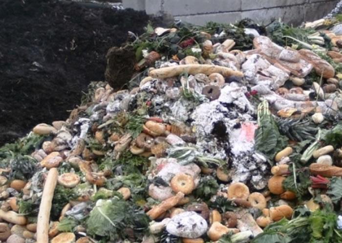 全球每年有大量食物被浪费。