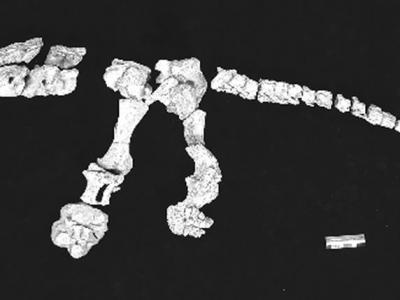 浙江恐龙化石:从发现到保护