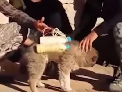 伊斯兰国IS逼无辜小狗当自杀炸弹客