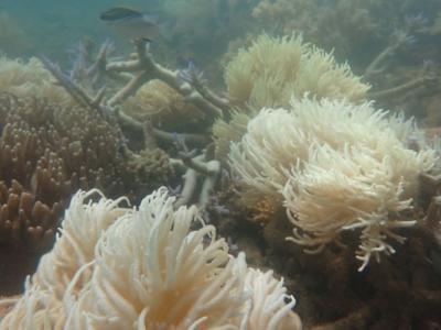 澳洲出现破纪录酷热天气 大堡礁珊瑚白化加剧