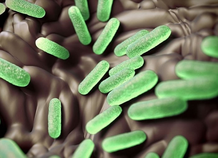 研究发现阿兹特克人的迅速殒落可能与沙门氏菌有关。
