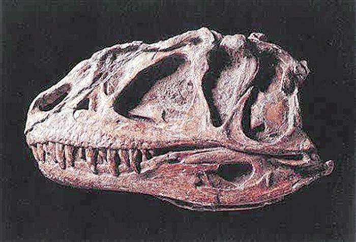 入选中国恐龙特种邮票 永川龙成为国家名片