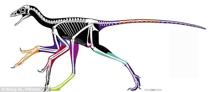 古生物学家利用新技术准确重塑恐龙身体轮廓 近鸟龙真貌首次展现