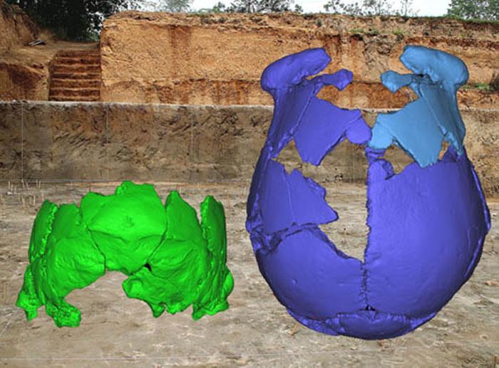 河南灵井遗址发现的许昌人1号(右侧)和2号(左侧)头骨化石(吴秀杰供图)